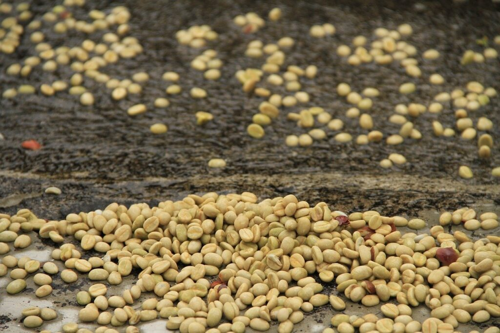 Best Green Coffee Beans for Home Roasting