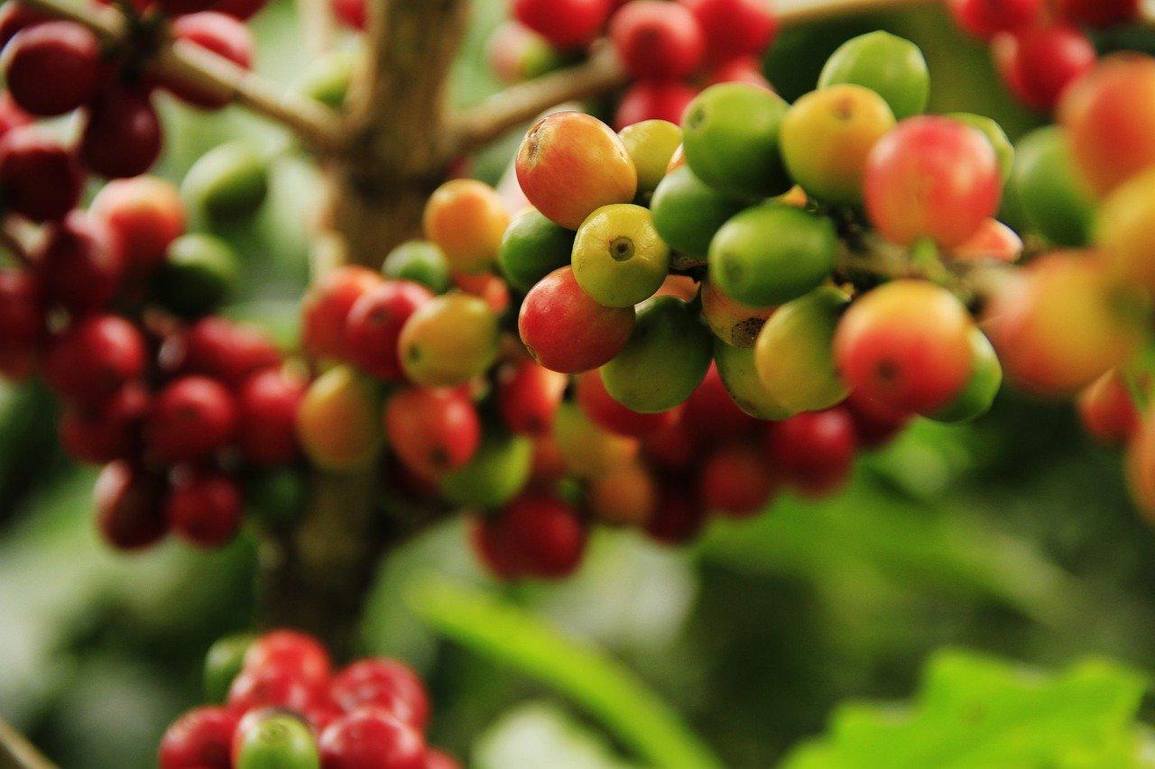 best raw coffee beans