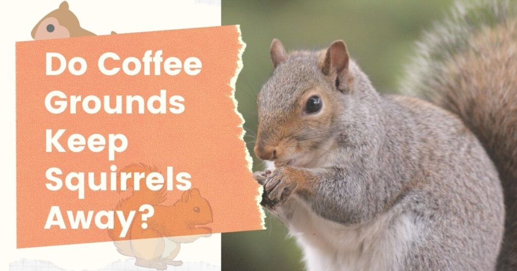 Do Coffee Grounds Keep Squirrels Away