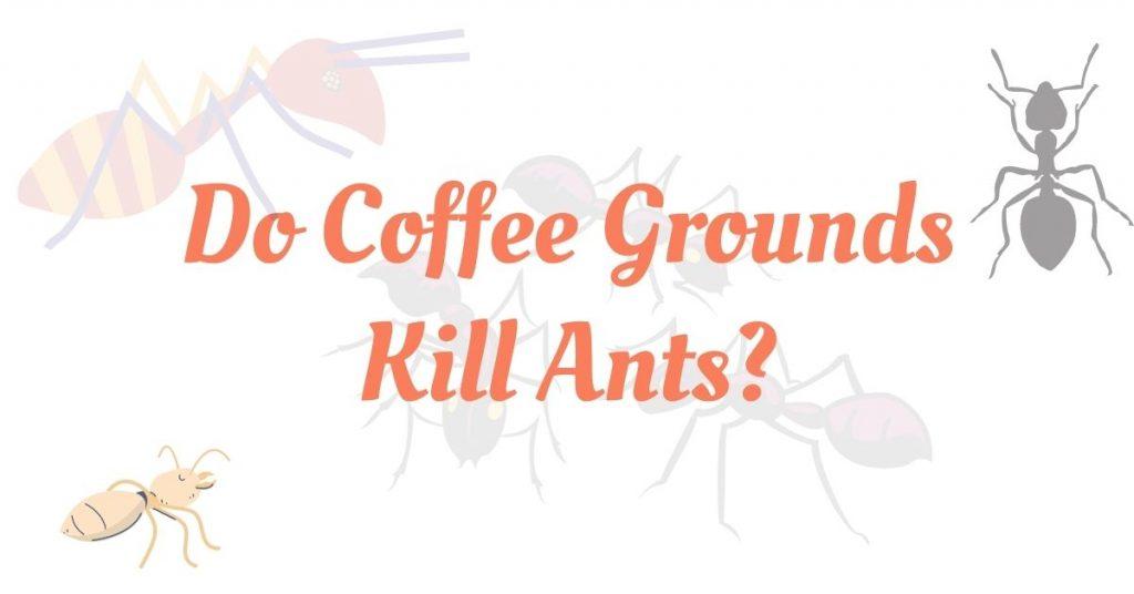 Do Coffee Grounds Kill Ants